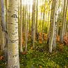 758  G Aspen Forest V