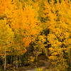 734  G Fall in South Central Alaska Aspens and Road V