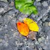23  G Fall Leaves