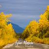 906  G McCarthy Road Views Fall Colors