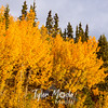 889  G Fall Colors Near Chitina