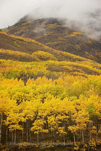 Fall colors come early to Alaska.