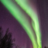 261  G Coldfoot Aurora V