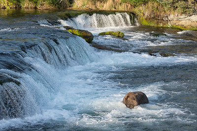 """The water """"boils"""" up right where this bear is waiting. The fish use the upwelling current  there to aid their jumps."""