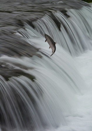 This is a combination of two photos taken at the same spot, within a second or two of one another. The first was taken at short shutter speed, to capture the fish in flight; the second was taken at long shutter speed to smooth out the water.