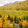 576  G Fall Color Along Mantanuska River