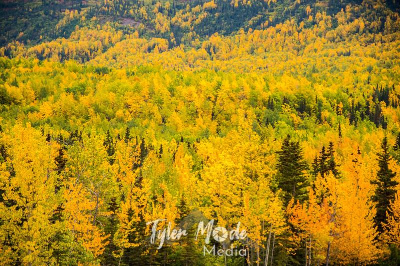 574  G Fall Color Along Mantanuska River