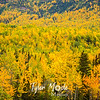 574  G Fall Color Along Mantanuska River