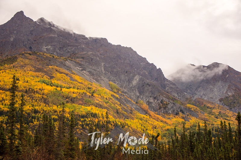 955  G Wrangell St  Elias National Park Fall Colors