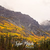 955  G Wrangell St  Elias National Park Fall Colors