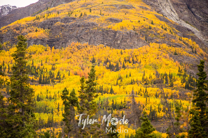 963  G Wrangell St  Elias National Park Fall Colors