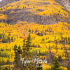 963  G Wrangell St  Elias National Park Fall Colors