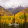 967  G Wrangell St  Elias National Park Fall Colors