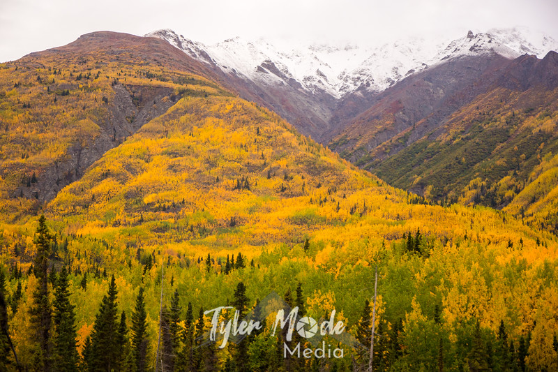 969  G Wrangell St  Elias National Park Fall Colors