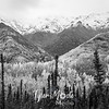 968  G Wrangell St  Elias National Park Fall Colors BW