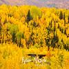 943  G Fall Colors Rail Bridge
