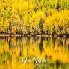 1006  G Wrangell St  Elias National Park Fall Colors Lake