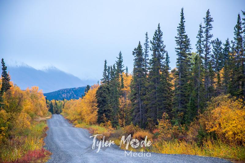 891  G Fall Colors McCarthy Road