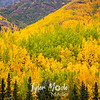 978  G Wrangell St  Elias National Park Fall Colors