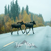 1741  G Moose Crossing Road