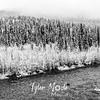1832  G Denali Snow River