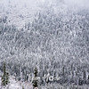 1829  G Denali Snow Trees