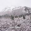 1890  G Denali Snow