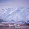 2342  G Snowy Denali Mountains