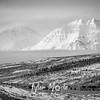 2353  G Snowy Denali Mountains BW