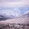 2338  G Snowy Denali Mountains