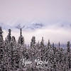 2350  G Snowy Denali Mountains and Trees