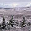 2368  G Snowy Denali