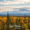 1394  G Mount Drum Fall Colors