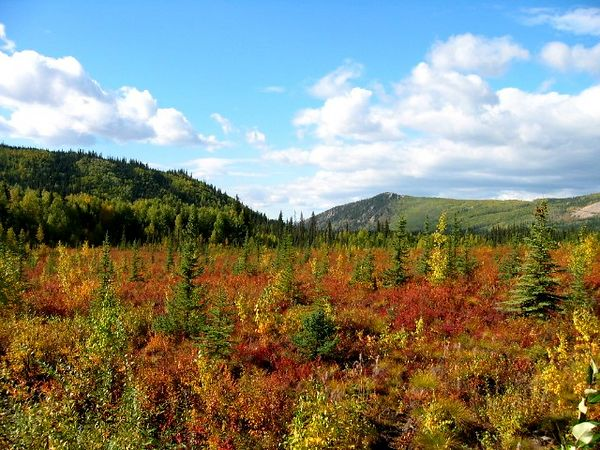 Fall along the Elliot Highway from north of Fairbanks west to Manly Hot Springs.