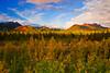Alaska,Park Highway near Denali, Fall Colors,阿拉斯加, 迪纳利,  秋色, 日落