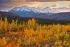 Alaska,Park Highway near Denali, Fall Colors,Sunrise, 阿拉斯加, 迪纳利, 秋色