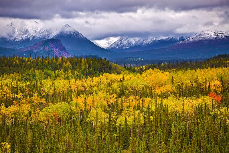 Alaska,Denali National Park,Fall Colors,阿拉斯加, 迪纳利国家公园, 秋色