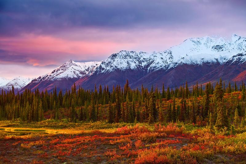 Alaska, Park Highway near Denali,  Fall Colors, Dawn, 阿拉斯加,迪纳利, 秋色