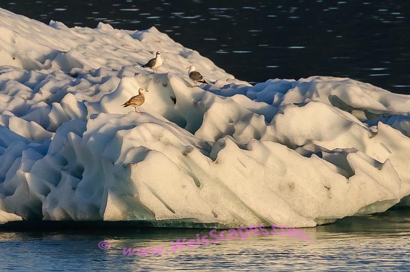Seagulls on an Alaskan ferry.