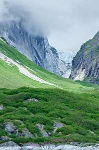 Vegetation get's a foothold after retreating glacier, Endicott Arm area.