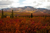 Denali National Park. August 28 - 2011