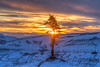 """Lonely Tree -  Eagle Summit"" January 5, 2013"