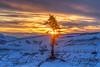 """Lonely Tree -  Eagle Summit"" January 5, 2013"