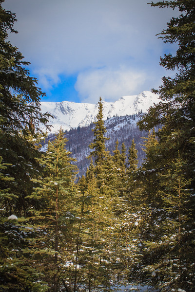 Horseshoe Lake Trail - Denali National Park