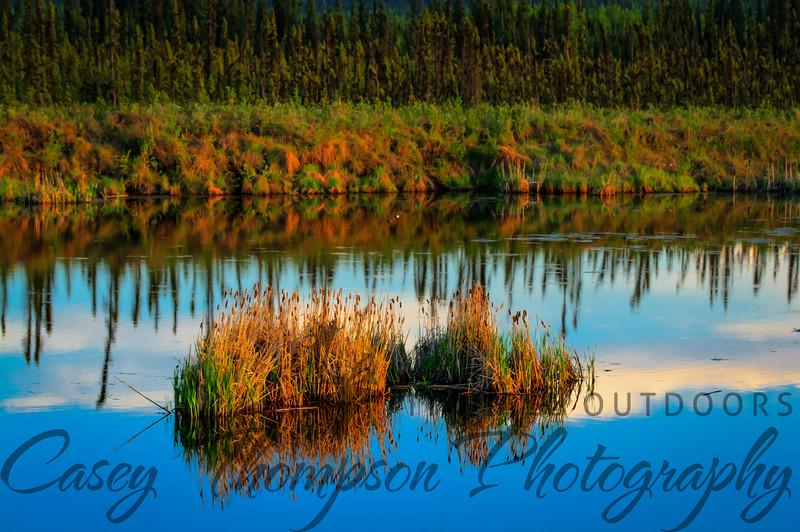 Peat Pond - Goldstream Road