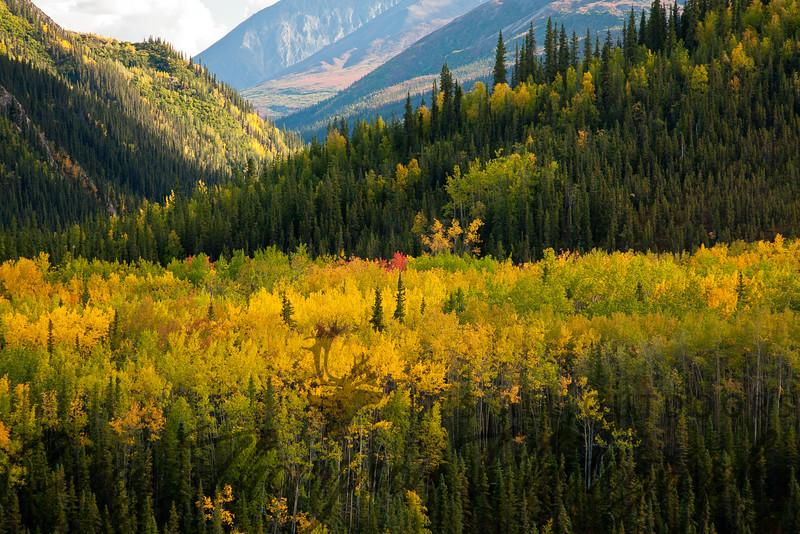 Denali National Park Road. August 28 - 2011