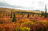 Brilliant Fall Colors of Denali National Park.