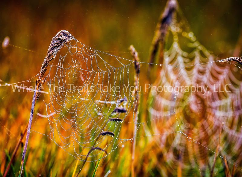 17.  Dew-Dropped Webs