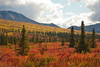 Denali National Park. August 28 - 2011