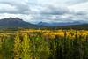 Beautiful Pallete of Fall Colors in Denali National Park.